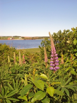 s-lupins-and-darnley-wharf